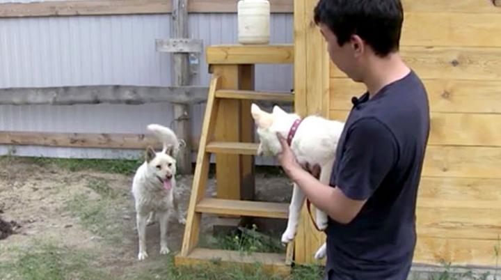 Якутская лайка впервые увидела щенка, выращенного из ее уха