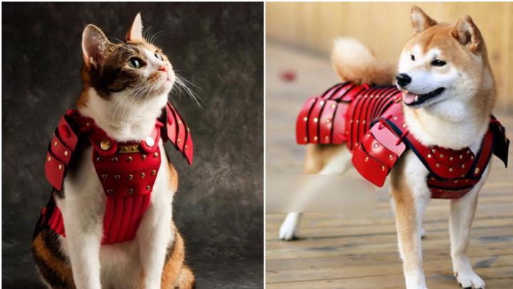 В Японии создали одежду для животных в виде самурайских доспехов