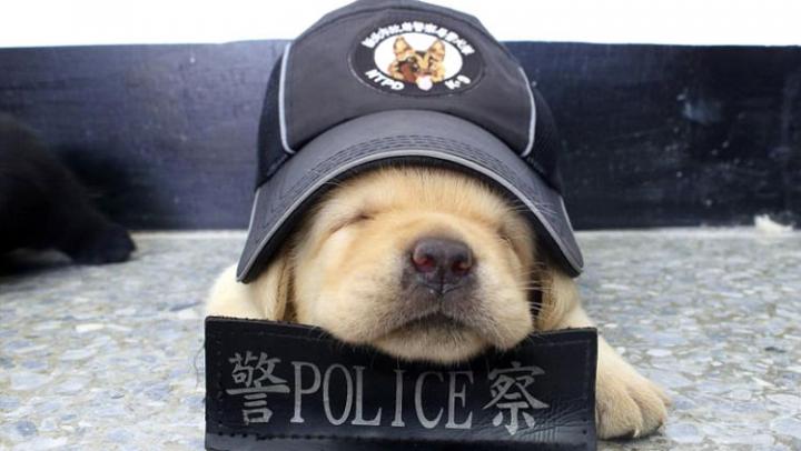 """СМИ рассказали о """"самой милой полицейской собаке в мире"""""""