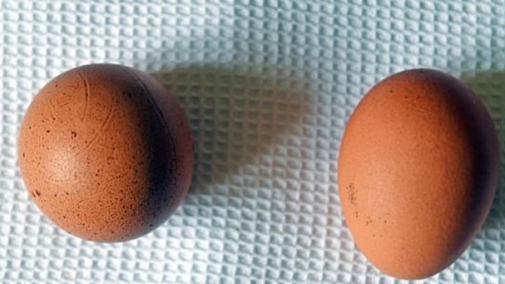 Пенсионерка надеется продать на eBay куриное яйцо в форме шара за 480 фунтов