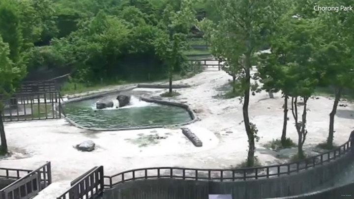 Взрослые слоны спасли упавшего в водоем слоненка. Видео