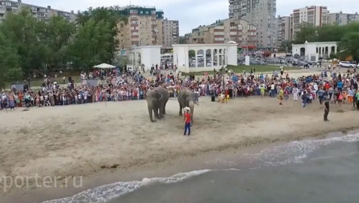 Купание слонов на пляже в Челябинске собрало толпу зевак: видео