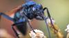 Ученые назвали насекомое, которое кусает больнее всего