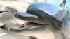 В Южной Корее на свободу выпустили двух дельфинов, проживших в неволе 20 лет