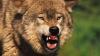 В барнаульском зоопарке волк набросился на трехлетнего мальчика