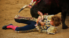 Во время испанской корриды пострадало около 80 человек