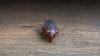В столичном детском саду обнаружили тараканов