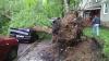 Ростовчанин спас автомобилистов от рухнувшего на дорогу 100-летнего дерева