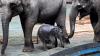 На Шри-Ланке спасли двух слонов, которых унесло в открытое море
