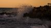В Португалии туристы спасли дикого кабана, которого унесло в море