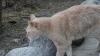Знаменитый кот-мэр Аляски скончался в возрасте 20 лет