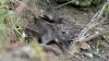 Крысы держат в страхе жителей многоэтажки на Ботанике