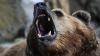 В Колорадо медведь напал на спящего американца и пытался его утащить