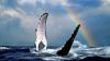 Биологи выяснили, что киты умеют разучивать песни