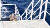 Свадебный теплоход потерял управление и столкнулся с опорой моста