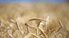 Объём сельхозпродукции снизился на 5% по сравнению с прошлогодними показателями