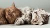 Для любителей котиков: Создан сайт с кошачьим мурчанием