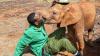 Слоновьи поцелуи: спасенная от гибели слониха привязалась к своему опекуну