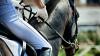 В Германии придумали устройство, которое позволяет замерять движения лошадей
