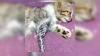 Пользователи соцсетей прокляли мастера, который сделал тату котёнку
