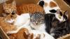 В США убийца 21 кошки получил 16 лет тюрьмы