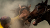 В России мужчина погиб от укуса лошади в горло