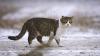 Калифорнийский живодер получил 16 лет тюрьмы за убийство 21 кошки