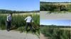 Полицейские обнаружили несколько плантаций конопли в пригородах Кишинёва