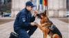 Служебные собаки пограничной полиции заняли первые места на европейском конкурсе