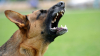 В Бельцах на пенсионерку напала бродячая собака