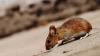 Эволюционный компромисс: учёные объяснили, почему боец никогда не станет хорошим бегуном