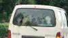 Фермера разыскивают за провоз коров на заднем сидении машины