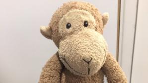 """В Лондоне сотрудники аэропорта ищут владельца плюшевой обезьянки-""""беспризорницы"""""""