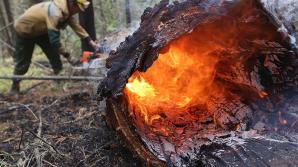 В разных странах мира продолжают бушевать лесные пожары