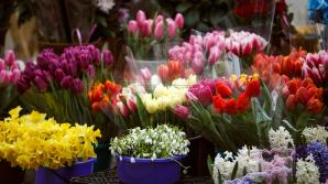 Контрольная закупка в цветочных магазинах: большинство продавцов не выдают чеки