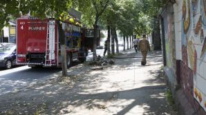 В столице сохраняется угроза возгорания свалок сухих веток