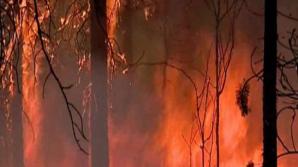 Франция и Португалия не могут справиться с мощными лесными пожарами