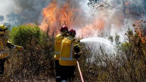 Два подростка задержаны по подозрению в поджоге лесов во Франции