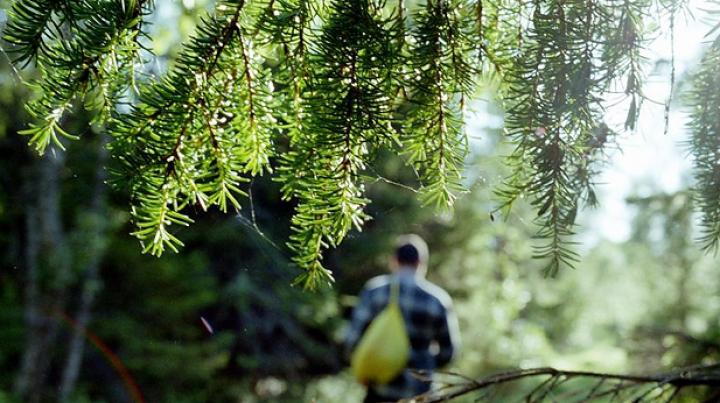 На Урале нашли двоих пропавших в лесу подростков