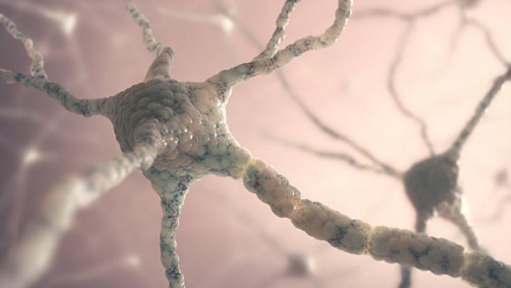 Ученые нашли способ остановить болезнь Альцгеймера на ранней стадии