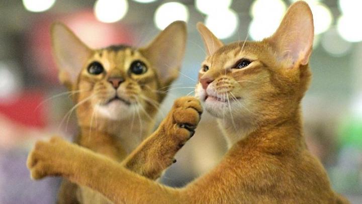 В Оренбурге пенсионерка заперла в квартире 10 кошек и уехала на дачу