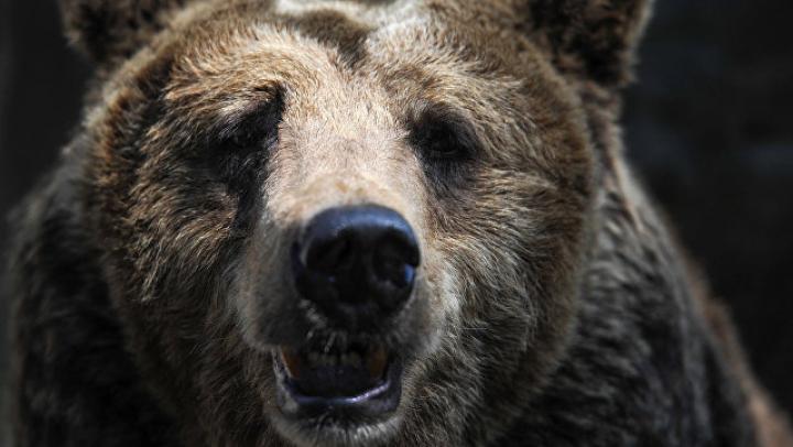 На Камчатке застрелили медведя, гулявшего по территории больницы