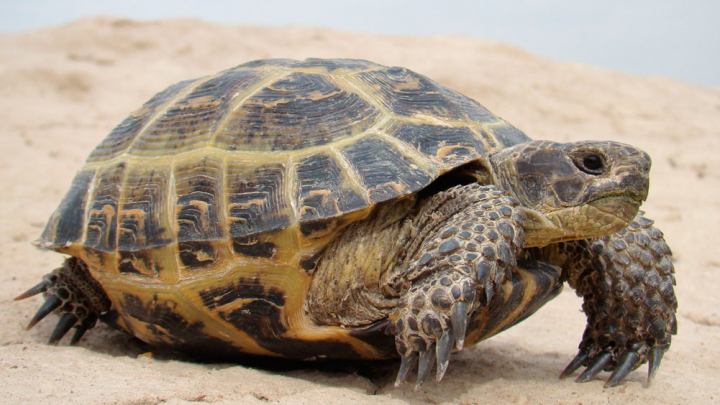 Ветеринар из Огайо склеил черепаху смолой и встретил её спустя несколько лет
