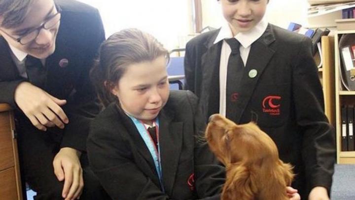 В английском колледже нервных учеников успокаивает щенок по кличке Шола