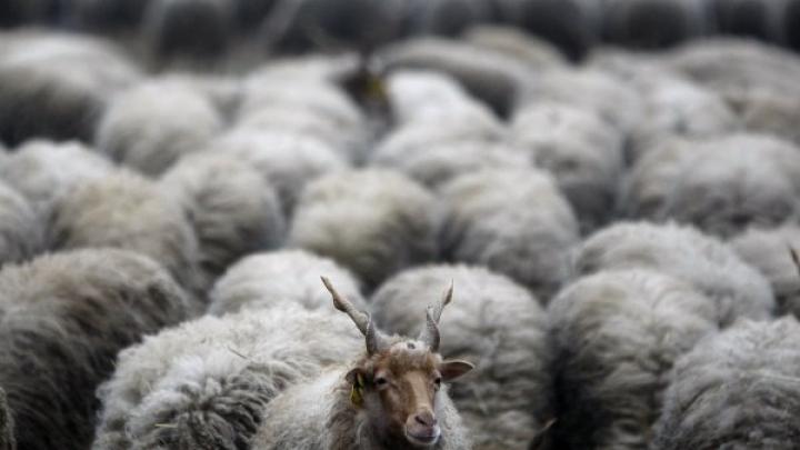 В Казахстане из-за удара молнии погиб пастух и полторы тысячи овец