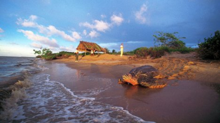 На пляже во Франции нашли мертвую черепаху весом около 350 килограммов