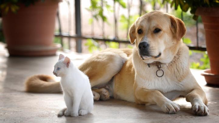 Учёные поставили точку в извечном споре кошатников и собачников