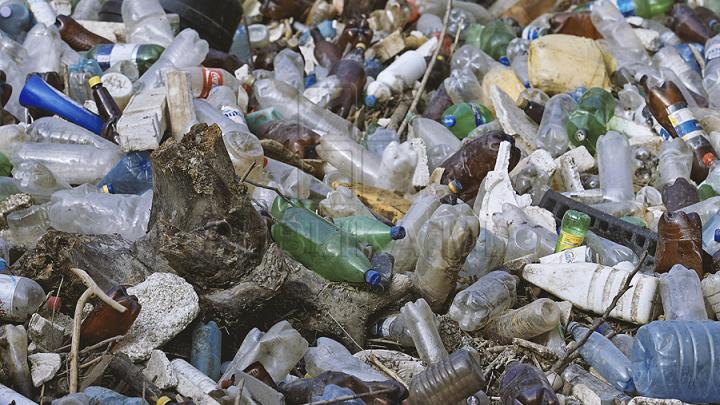 Фирма из Бельц незаконно свозила в ореховый сад в Корлэтенах мусор