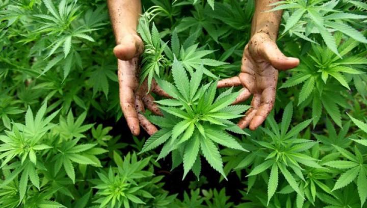 В Неваде разрешили продавать марихуану для развлечения