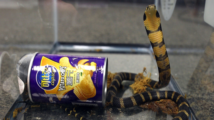 Американцу прислали ядовитых кобр в банках из-под чипсов